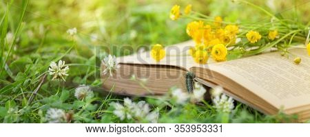 Open Book, Yellow Flowers Fanned Pages On Grass. Summer Spring Background With Open Book. Back To Sc