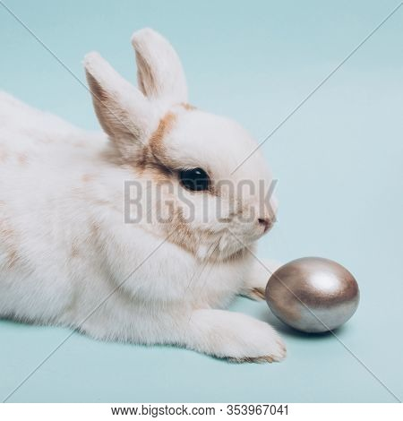 White Rabbit With Silver Easter Egg On A Blue Background, Decoration, Holiday Background Concept. Tr