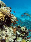 bottom of sea with colorful  coral reef poster