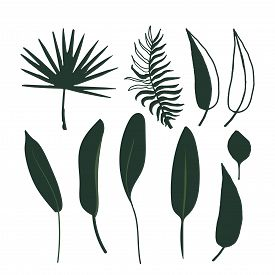 Set Of Abstract Tropical Leaves. Vector Isolated Stock Elements On A White Background. Silhouette Fl