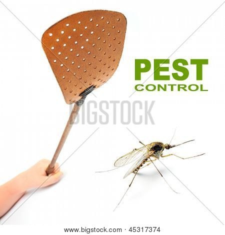 Flyswatter and mosquito. Ecological pest control.  Picture with space for your text.