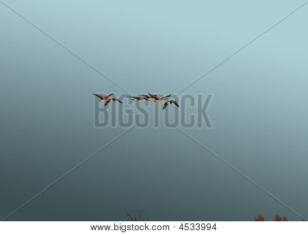 Geese Flying In A Storm