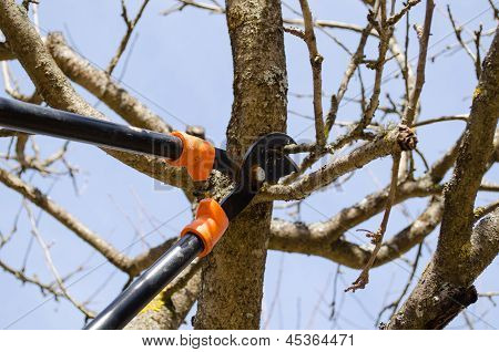 Fruit Tree Trim Two Handle Clippers Spring Garden