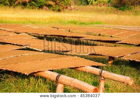 Closeup Sliced Tobacco Leaf On Drying Process By Solar Light