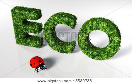 Ladybirds With Eco Text