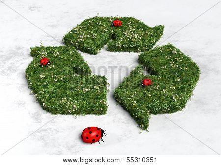 Ladybirds On Recycling Symbol