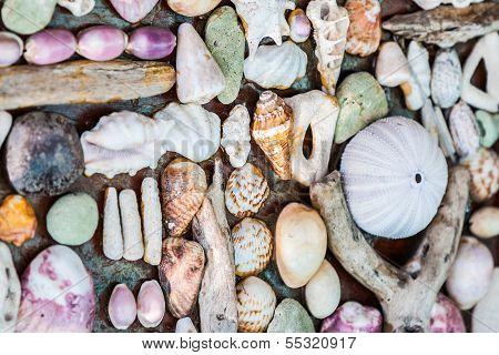 Wall Of Seashell