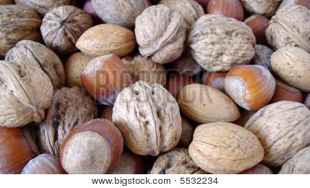 Nuts - Close Up