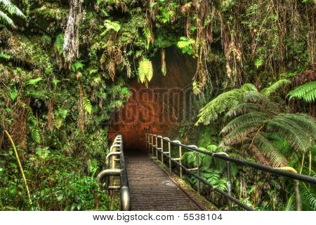Enter The Thurston Lava Tube