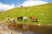 Horses drinking water from a pond in the mountains poster