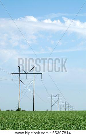 Power Poles In Hay Field
