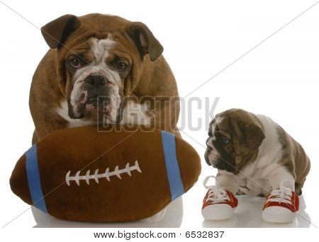english bulldog puppy wearing running shoes sitting beside dad ready to teach the game poster