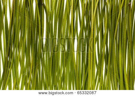 Thick green gerbera stems on white background poster