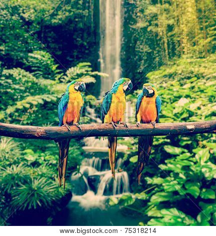 Vintage retro effect filtered hipster style travel image of Blue-and-Yellow Macaw (Ara ararauna), also known as the Blue-and-Gold Macaw