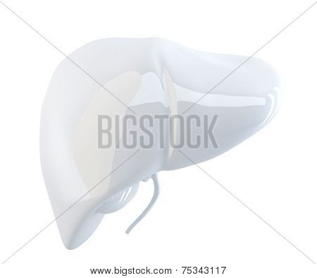 Human Liver. 3D Render. Isolated, Contains Clipping Path.