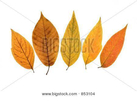 Fall leafs 4