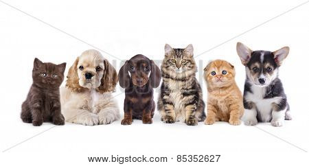 Group of  dogs and  kittens sitting in front of a white background