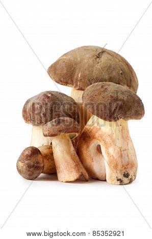 Polish Mushroom On A White Background