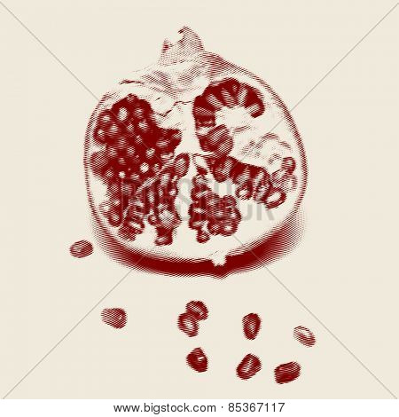 Vector engraved style one color illustration, half of pomegranate