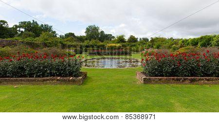 Red dahlias Barrington Court gardens near Ilminster Somerset England uk Tudor manor house