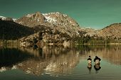 Dad fishing with son in lake in Yosemite. poster