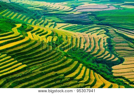 Terraced rice field in rice season in Mu Cang Chai, Vietnam