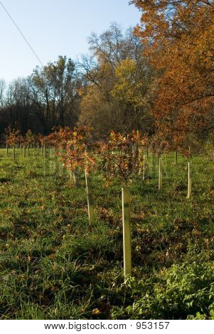 Trees Planted For Conservation