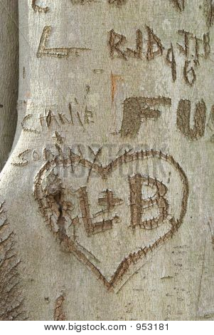 Etching On A Tree Trunk