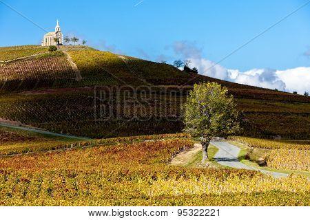 vineyards grand cru in Beaujolais witha church, Fleurie, Rhone-Alpes, France
