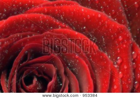 Hazy Close Up Of A Rose