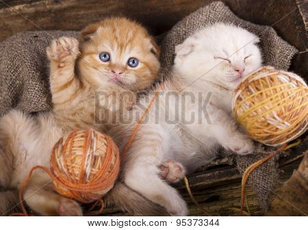 kitten and a ball of yarn