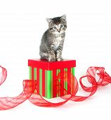 tabby kitten sitting on top of gift box with red ribbon on white background poster