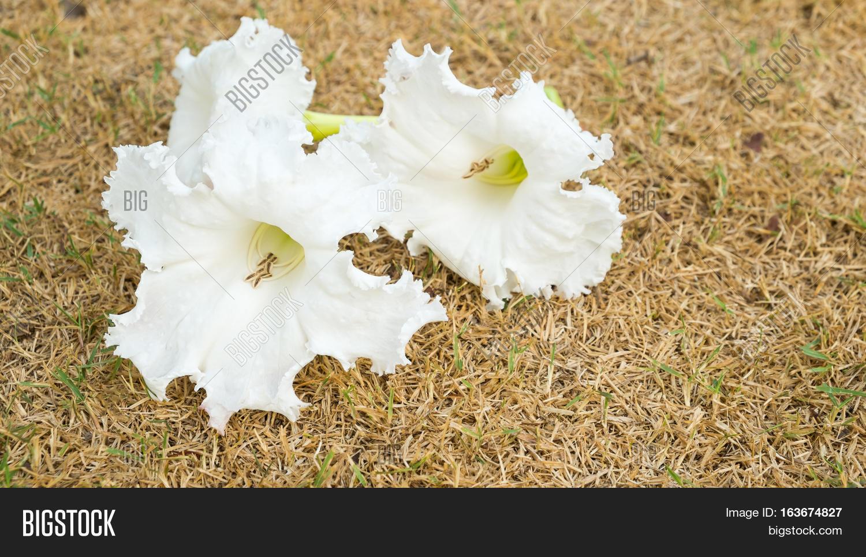 White Flowers Image Photo Free Trial Bigstock