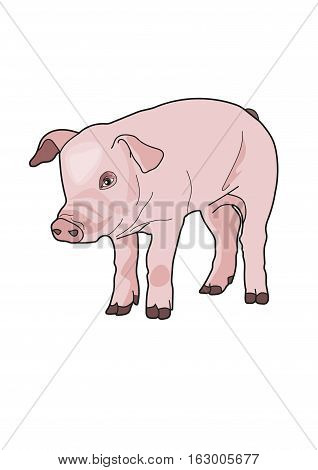 The pink piggy on a white background.