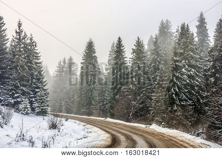 winter mountain landscape. winding road that leads into the spruce forest covered with snow
