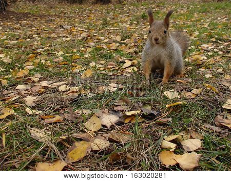 Cute Squirrel In Forest