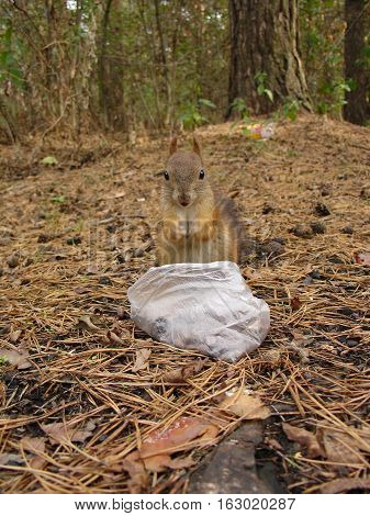 Squirrel Eats In Forest