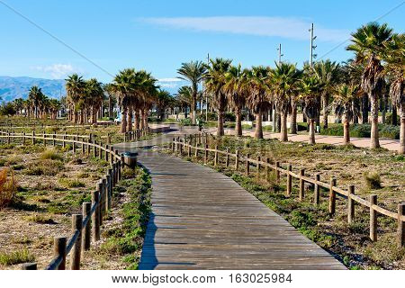 Pedestrian walkway lined with a palm trees in Retamar park. Province of Almeria. Spain