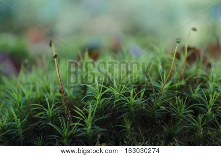 Close up view and shallow focussed on moss in a forest