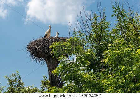 Stork in a nest with baby bird.