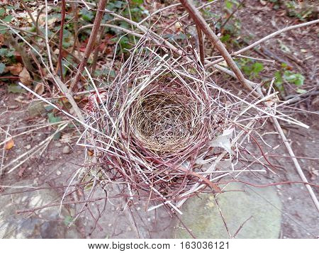 an empty bird's nest after baby birds have hatched and flown away
