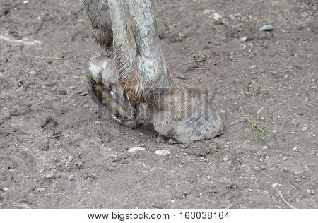 hind legs standing horse, hoofs on the wet ground