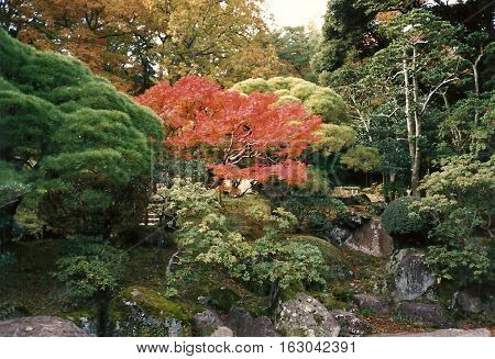 A view of autumn foliage in the gardens at the Narita-san  Shinshō-ji Shingon Buddhist temple in Narita, Japan, during November, 1987.