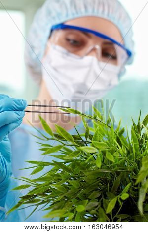 Female botanist taking sample of a leaf in lab