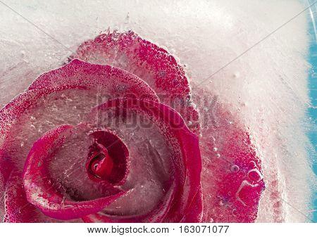 Frozen Flora - Rose