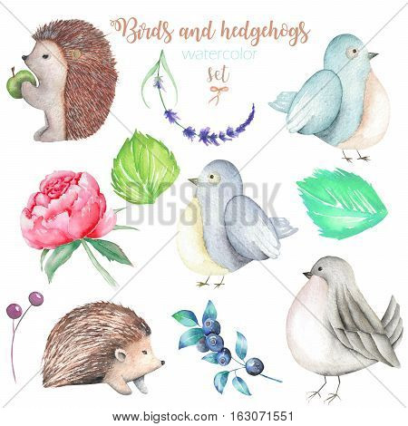 Collection, set of watercolor cute birds, hedgehogs and forest elements, hand drawn isolated on a white background