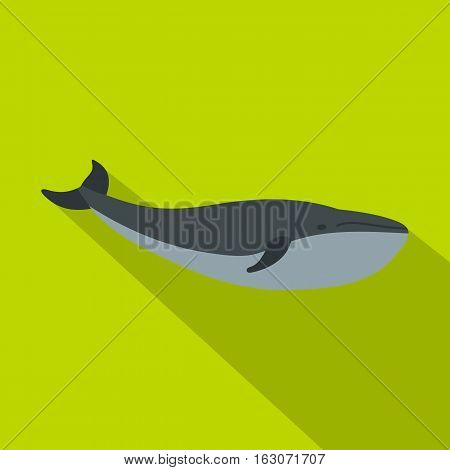 Whale icon. Flat illustration of whale vector icon for web