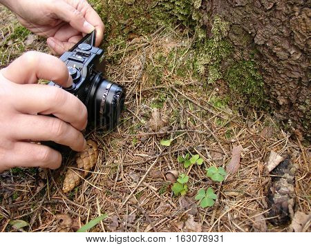 Hands with camera shot the forest frog