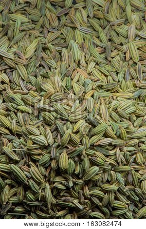 Fennel Seed Close Up With Gradient Light