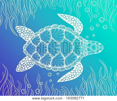 Sea turtle in line art style. Hand drawn vector illustration. Top view. Design for coloring book. Set of ocean elements